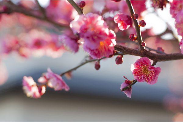 立春」の意味と主な行事を知りたい!実はとても大切な日だった? | 贈り物・マナーの情報サイト | しきたり.net